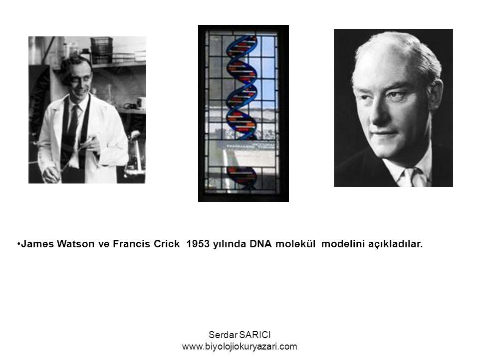 M.S Meselson ve F.W.Stahl 1958 de DNA eşlenmesi ile ilgili mekanizmayı açıkladılar.
