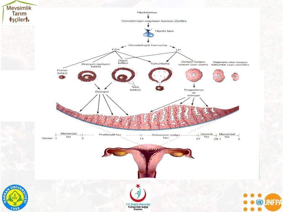 Bulaşıcı Hastalıklar Rubella (kızamıkçık) Sitomegalovirüs (CMV) Herpes simplex virüsü (Uçuk ) Varicella (suçiçeği) HIV Toksoplazmozis Sifiliz