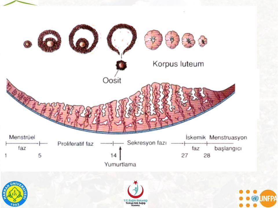 –Geç dönemde; Damak ve nazal septumda yıkıcı lezyonlar, Diş anomalileri (Hutchinson dişleri), Anormal yüz görünümü (çıkıntılı alın, semer burun)