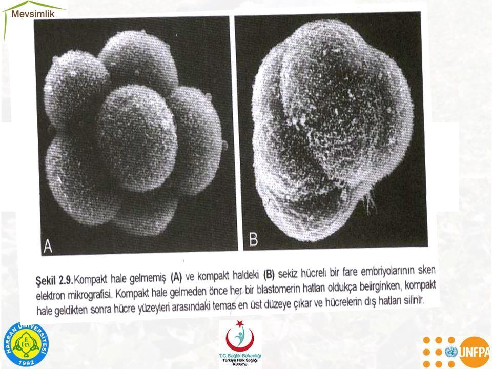 Sitomegalovirüs (CMV): –Gebeliğin ilk üç ayında geliştiğinde kendiliğinden düşükle sonuçlanabilir.