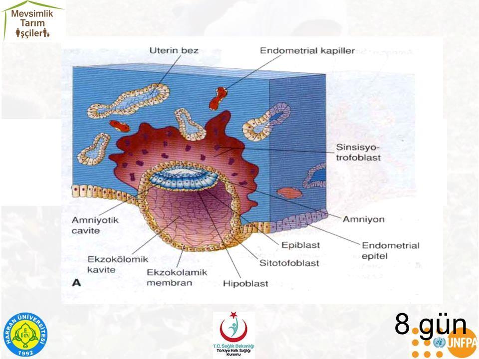 Varicella (suçiçeği): –Gebeliğin ilk 4 ayında geçirilen infeksiyon sonucu : Ekstremite hipoplazisi Kas atrofisi Zeka geriliği HIV: Mikrosefali Büyüme geriliği, Anormal yüz yapısı.