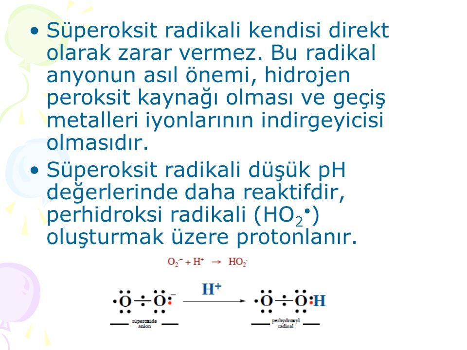 Süperoksit radikali kendisi direkt olarak zarar vermez.