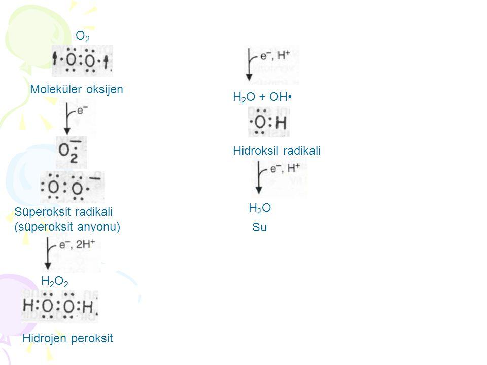 O2O2 Moleküler oksijen Süperoksit radikali (süperoksit anyonu) H2O2H2O2 Hidrojen peroksit H 2 O + OH Hidroksil radikali H2OH2O Su