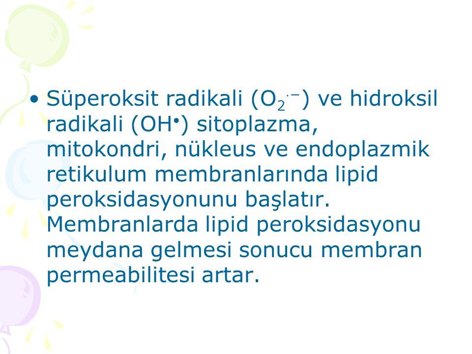 Süperoksit radikali (O 2 ⋅ − ) ve hidroksil radikali (OH ) sitoplazma, mitokondri, nükleus ve endoplazmik retikulum membranlarında lipid peroksidasyonunu başlatır.