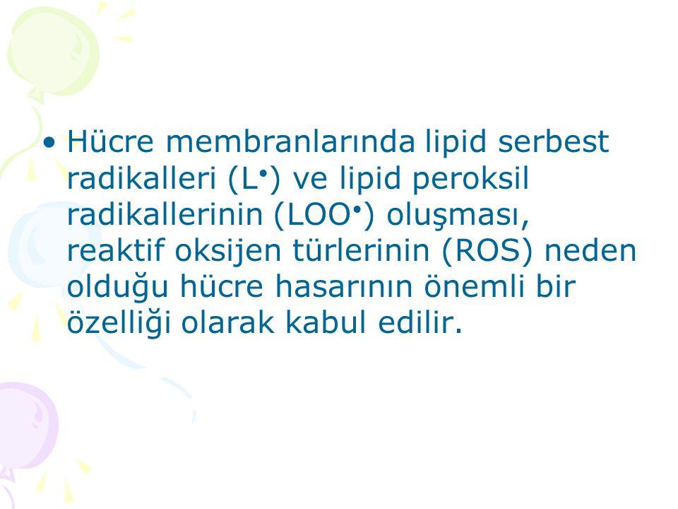 Hücre membranlarında lipid serbest radikalleri (L ) ve lipid peroksil radikallerinin (LOO ) oluşması, reaktif oksijen türlerinin (ROS) neden olduğu hü