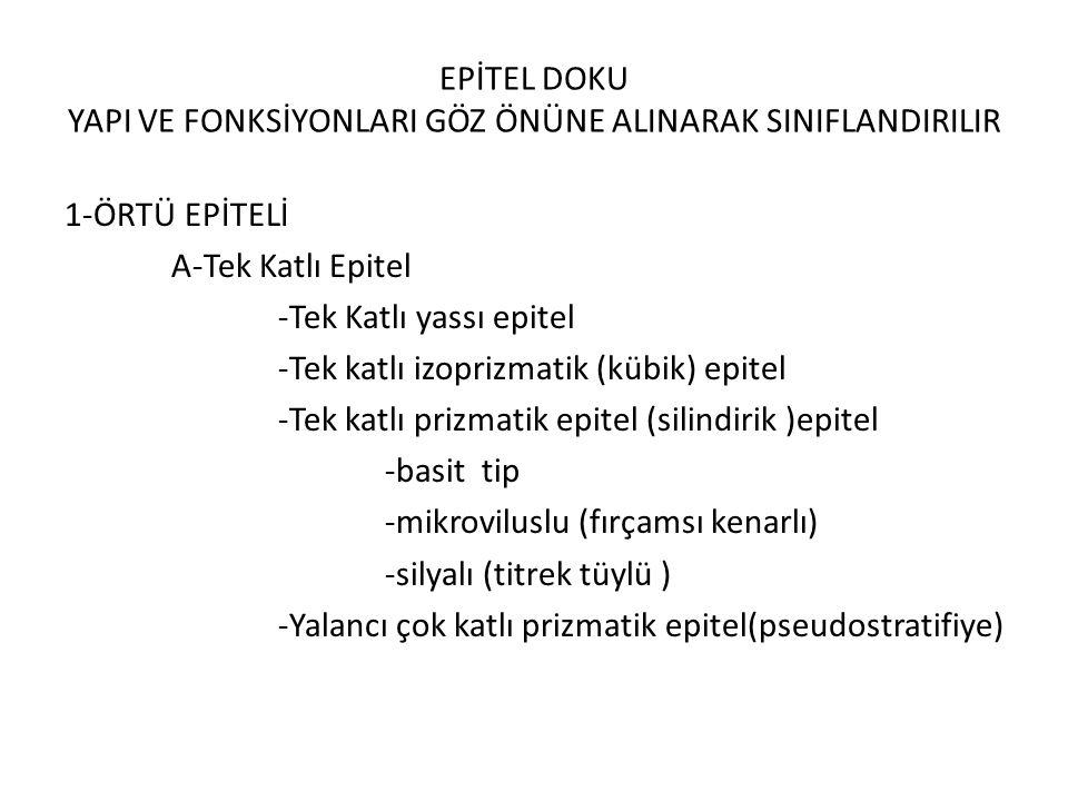 EPİTEL DOKU YAPI VE FONKSİYONLARI GÖZ ÖNÜNE ALINARAK SINIFLANDIRILIR 1-ÖRTÜ EPİTELİ A-Tek Katlı Epitel -Tek Katlı yassı epitel -Tek katlı izoprizmatik