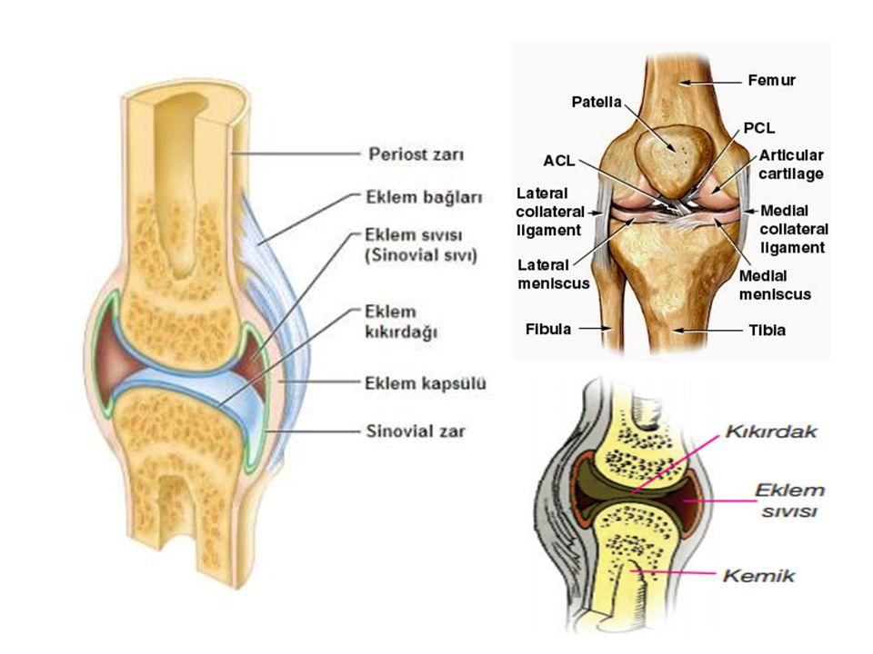 Keratin sülfat;kıkırdak,omurlararası diskte Heparin sülfat;akciğer,karaciğer,aort