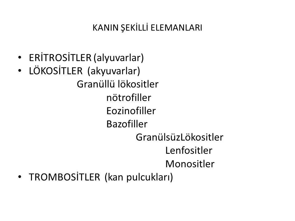 KANIN ŞEKİLLİ ELEMANLARI ERİTROSİTLER (alyuvarlar) LÖKOSİTLER (akyuvarlar) Granüllü lökositler nötrofiller Eozinofiller Bazofiller GranülsüzLökositler Lenfositler Monositler TROMBOSİTLER (kan pulcukları)