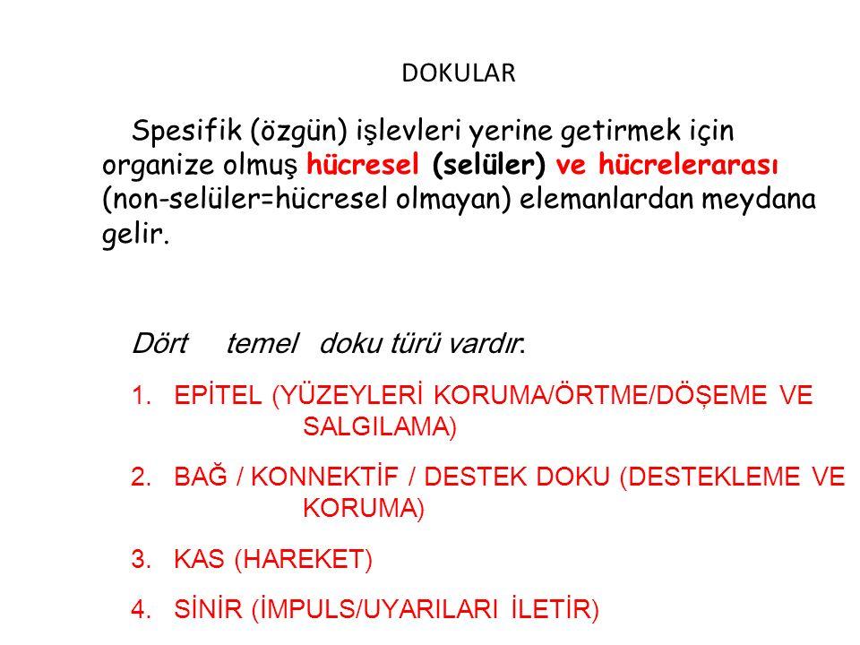 DOKULAR Spesifik (özgün) i ş levleri yerine getirmek için organize olmu ş hücresel (selüler) ve hücrelerarası (non-selüler=hücresel olmayan) elemanlar