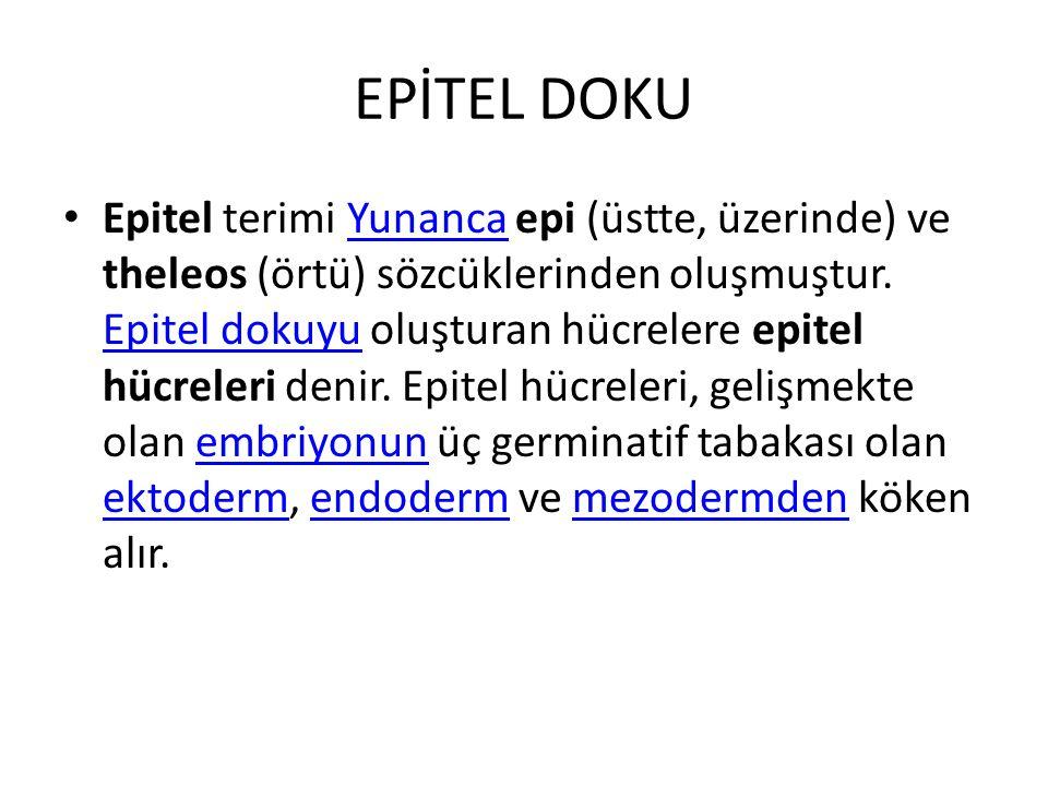 EPİTEL DOKU Epitel terimi Yunanca epi (üstte, üzerinde) ve theleos (örtü) sözcüklerinden oluşmuştur. Epitel dokuyu oluşturan hücrelere epitel hücreler
