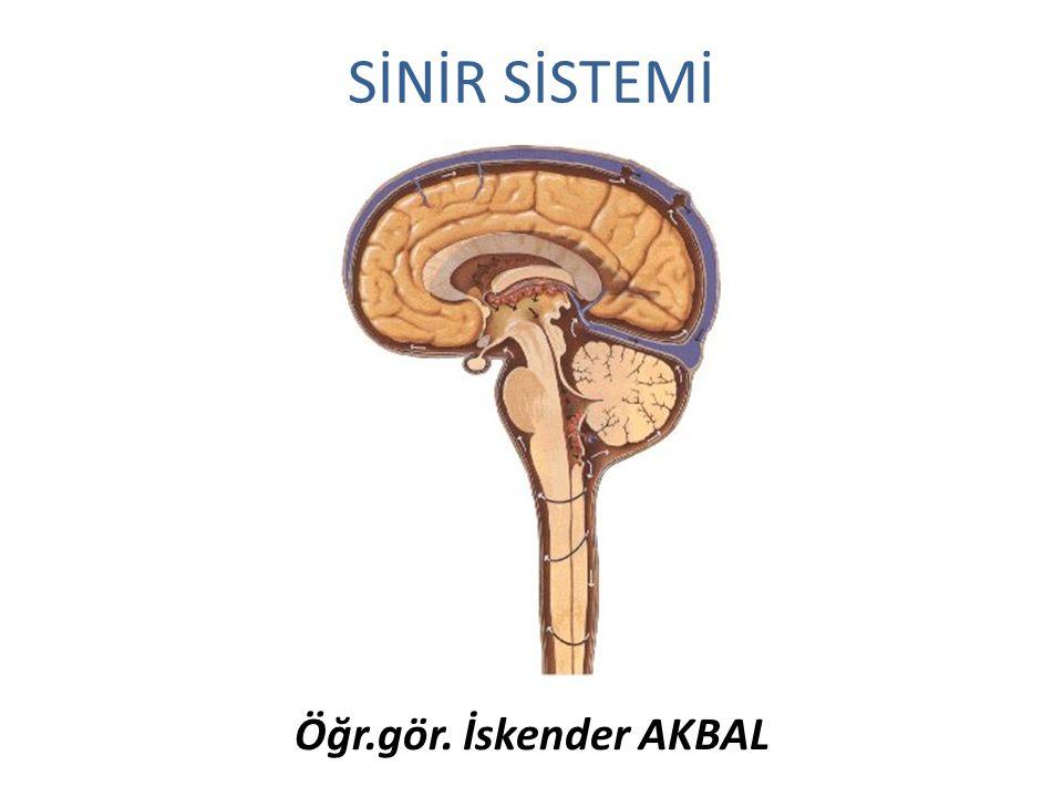 Plexus lumbalis Karın alt duvarının ön yan kısımları Uyluk ve dış genital sistem n. femoralis