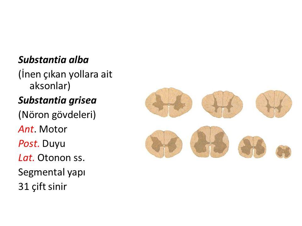 Substantia alba (İnen çıkan yollara ait aksonlar) Substantia grisea (Nöron gövdeleri) Ant. Motor Post. Duyu Lat. Otonon ss. Segmental yapı 31 çift sin