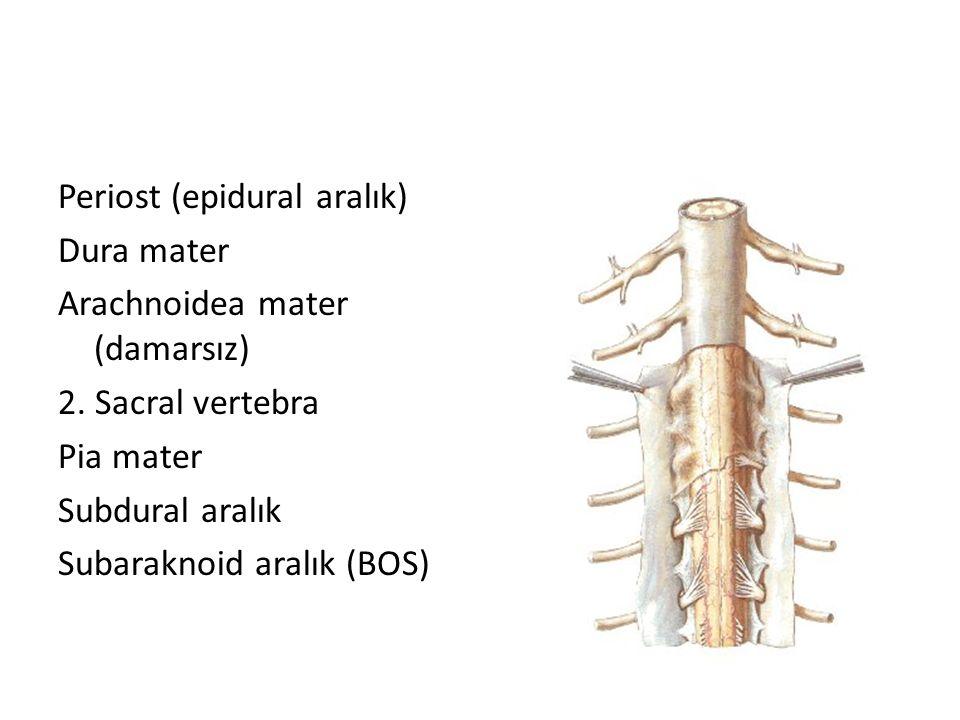 Periost (epidural aralık) Dura mater Arachnoidea mater (damarsız) 2. Sacral vertebra Pia mater Subdural aralık Subaraknoid aralık (BOS)