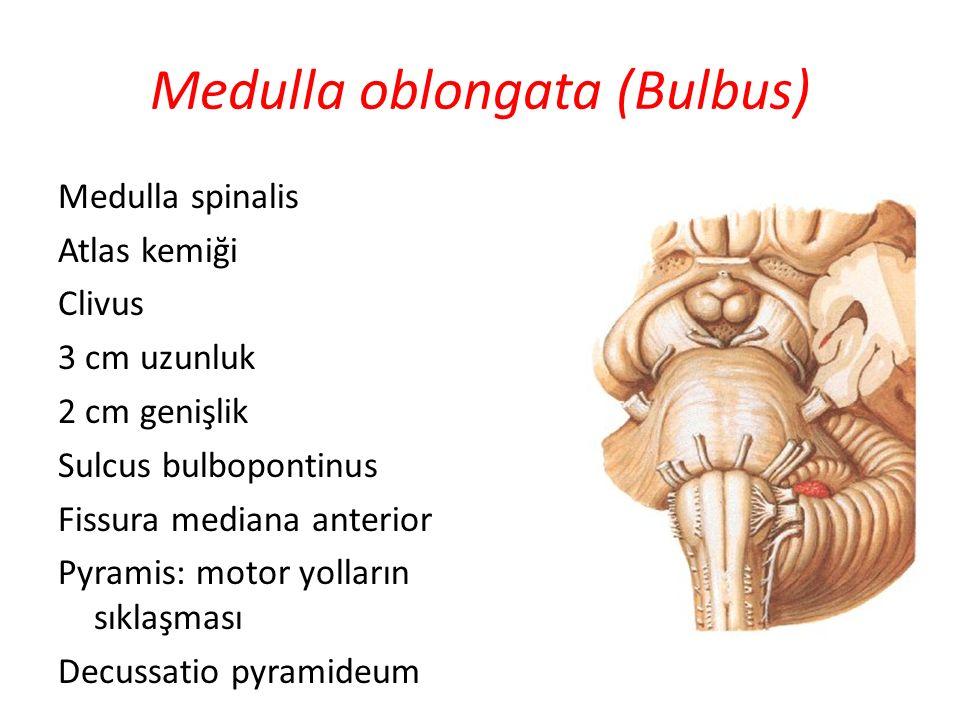 Medulla oblongata (Bulbus) Medulla spinalis Atlas kemiği Clivus 3 cm uzunluk 2 cm genişlik Sulcus bulbopontinus Fissura mediana anterior Pyramis: moto