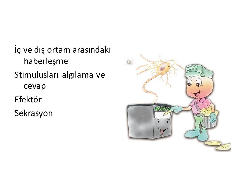 MSS ve BÖLÜMLERİ  Medulla spinalis  Encephalon (Beyin) Cerebrum Cerebellum Truncus encephalicus