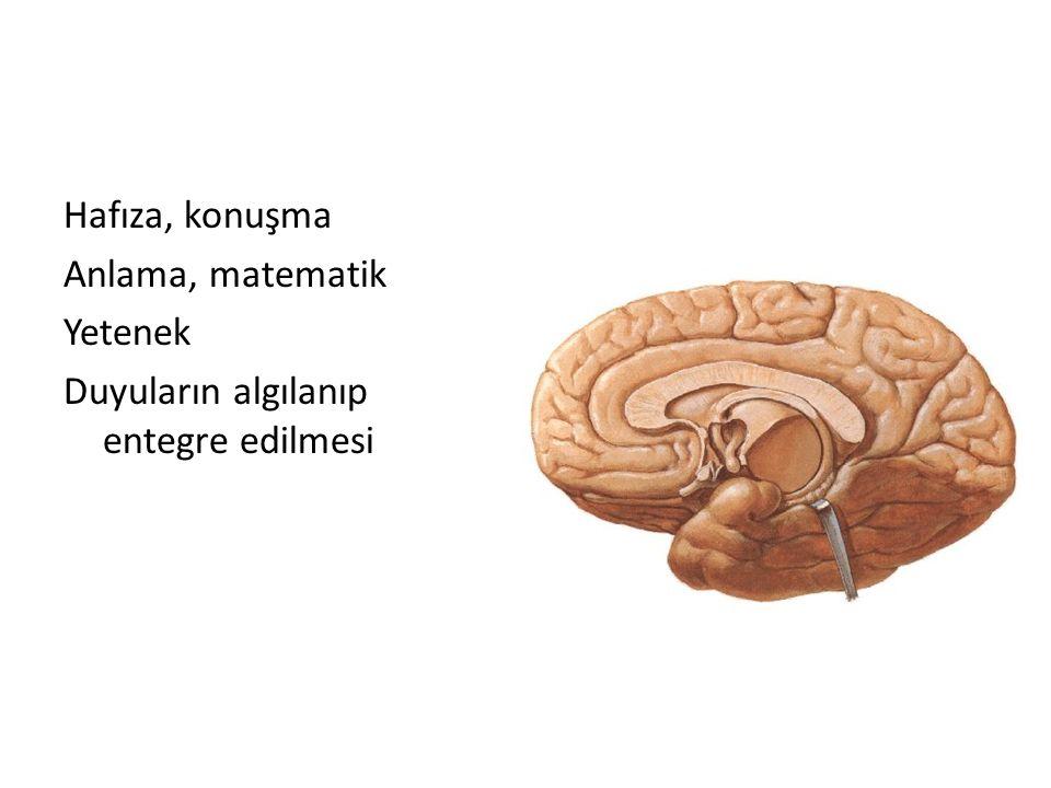 Hafıza, konuşma Anlama, matematik Yetenek Duyuların algılanıp entegre edilmesi
