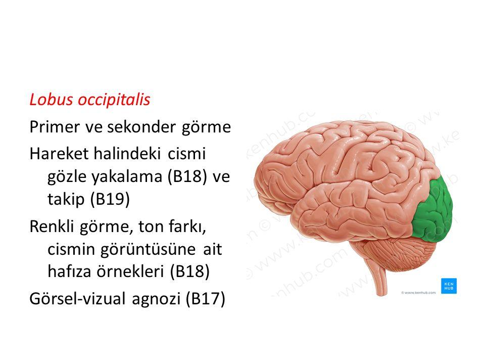 Lobus occipitalis Primer ve sekonder görme Hareket halindeki cismi gözle yakalama (B18) ve takip (B19) Renkli görme, ton farkı, cismin görüntüsüne ait