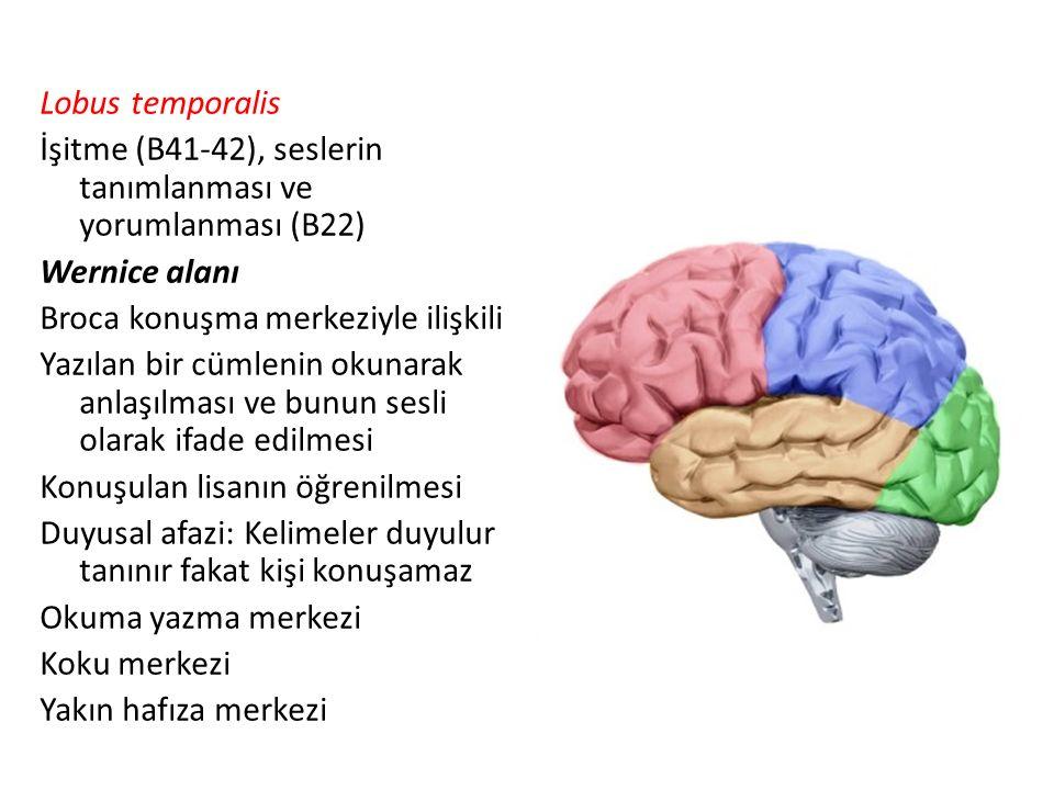 Lobus temporalis İşitme (B41-42), seslerin tanımlanması ve yorumlanması (B22) Wernice alanı Broca konuşma merkeziyle ilişkili Yazılan bir cümlenin oku