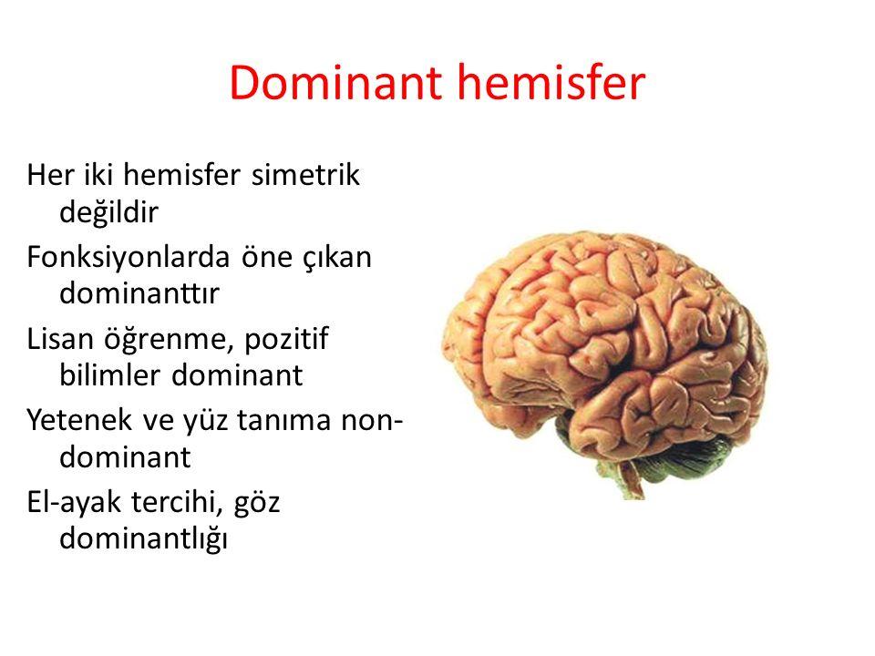 Dominant hemisfer Her iki hemisfer simetrik değildir Fonksiyonlarda öne çıkan dominanttır Lisan öğrenme, pozitif bilimler dominant Yetenek ve yüz tanı