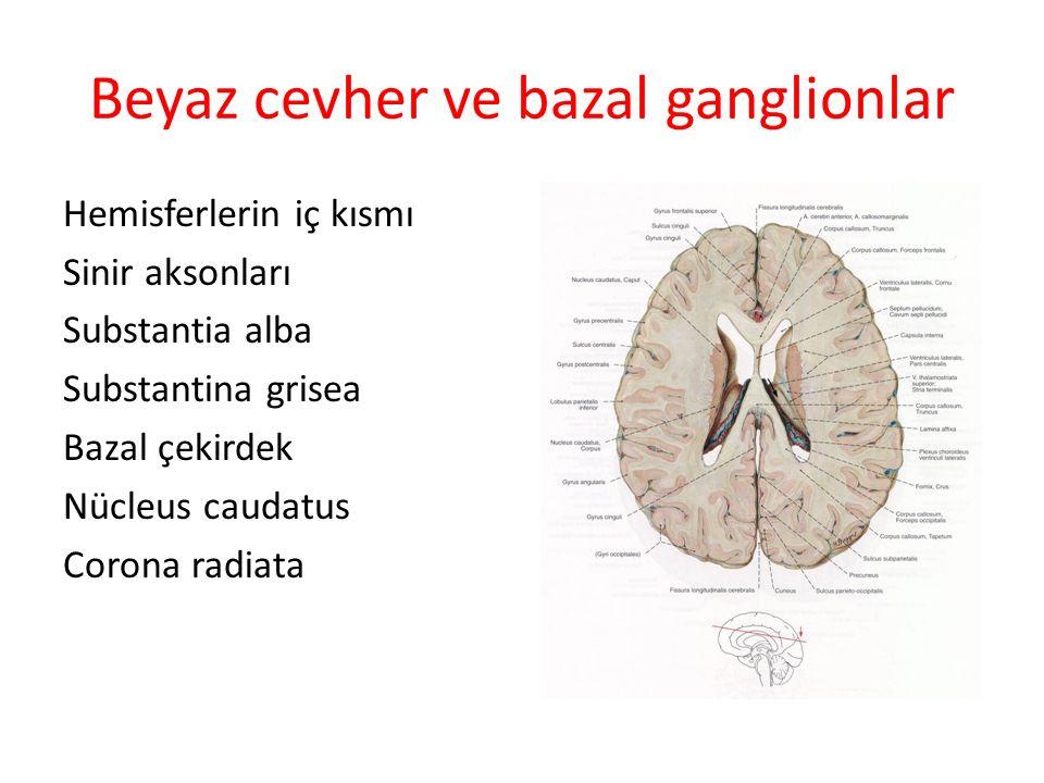 Beyaz cevher ve bazal ganglionlar Hemisferlerin iç kısmı Sinir aksonları Substantia alba Substantina grisea Bazal çekirdek Nücleus caudatus Corona rad