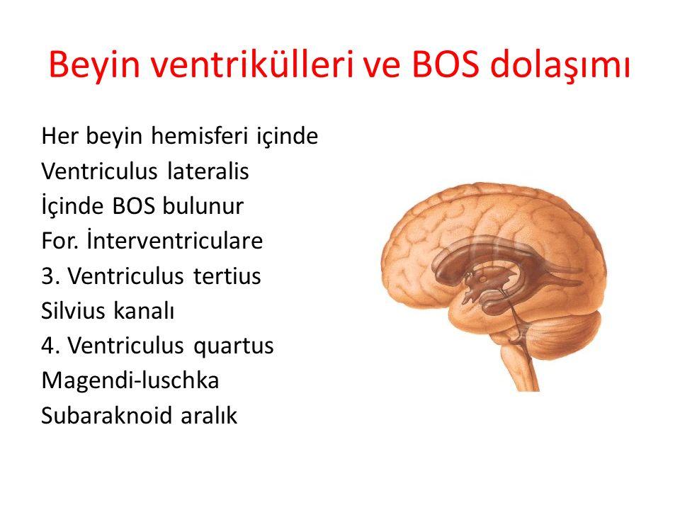 Beyin ventrikülleri ve BOS dolaşımı Her beyin hemisferi içinde Ventriculus lateralis İçinde BOS bulunur For. İnterventriculare 3. Ventriculus tertius