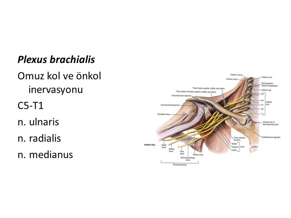 Plexus brachialis Omuz kol ve önkol inervasyonu C5-T1 n. ulnaris n. radialis n. medianus