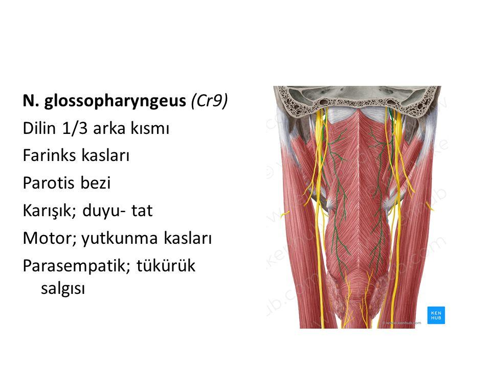N. glossopharyngeus (Cr9) Dilin 1/3 arka kısmı Farinks kasları Parotis bezi Karışık; duyu- tat Motor; yutkunma kasları Parasempatik; tükürük salgısı