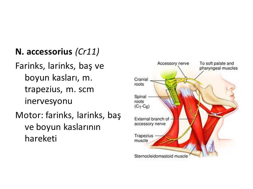 N. accessorius (Cr11) Farinks, larinks, baş ve boyun kasları, m. trapezius, m. scm inervesyonu Motor: farinks, larinks, baş ve boyun kaslarının hareke