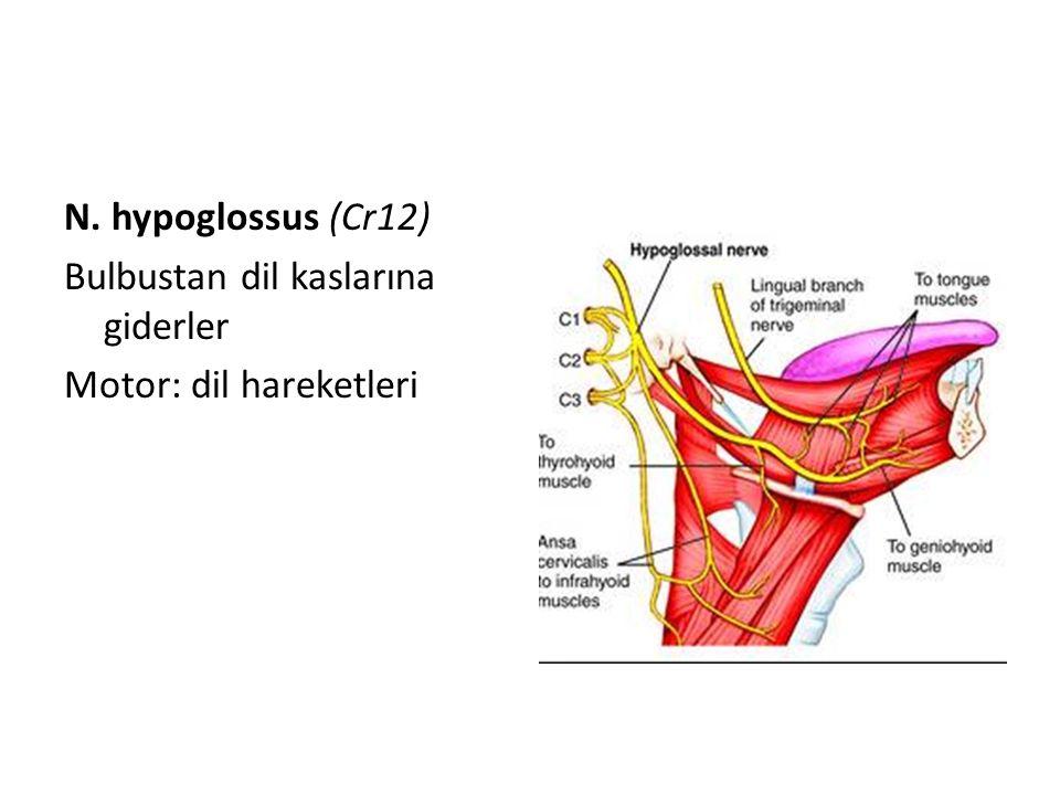 N. hypoglossus (Cr12) Bulbustan dil kaslarına giderler Motor: dil hareketleri