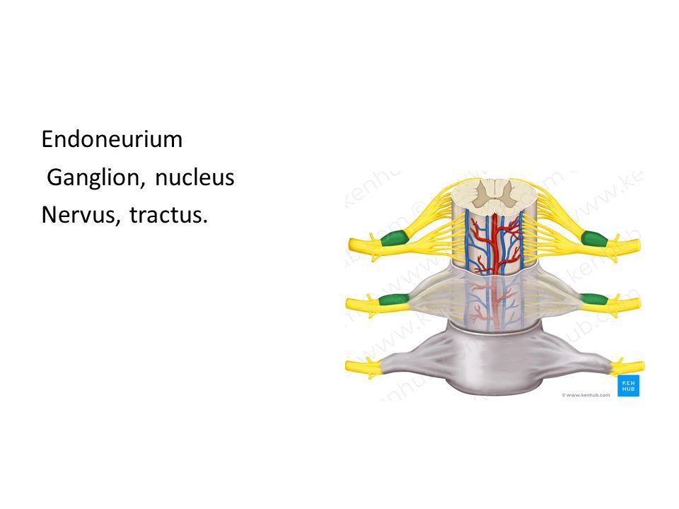 Fonksiyonlarına göre nöron tipleri Afferent (duyu taşıyan nöronlar) Efferent (motor) nöronlar İnternöronlar (ara nöronlar)