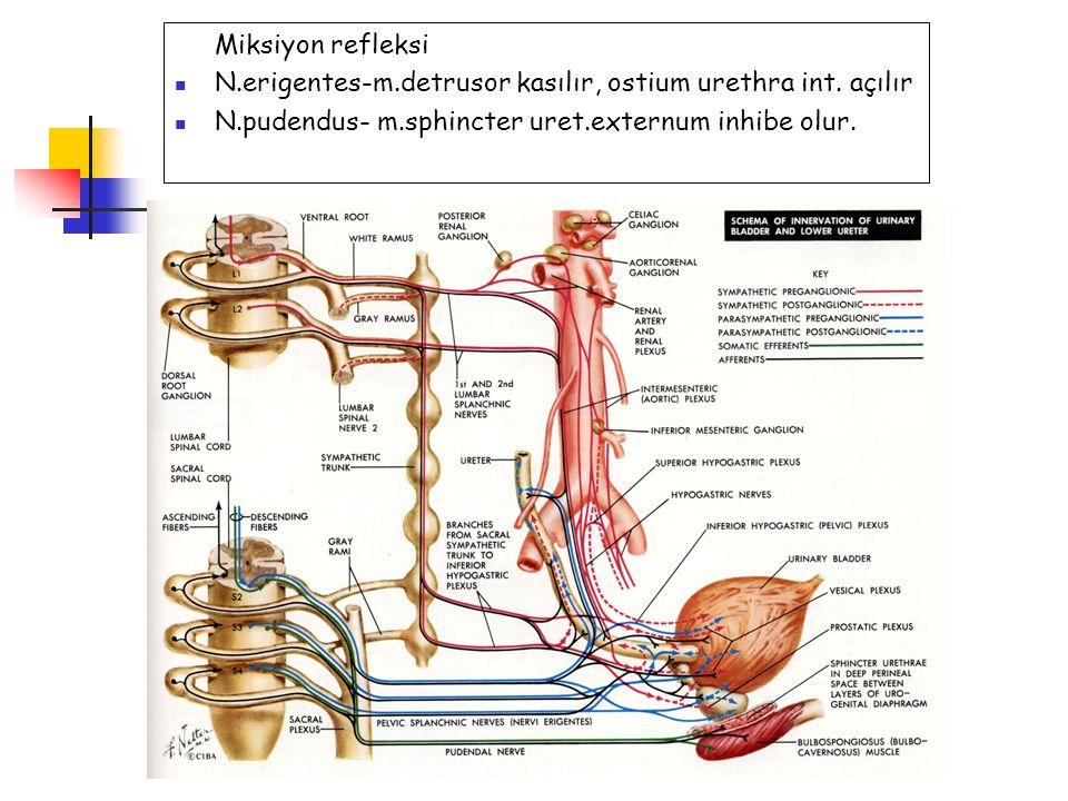 Miksiyon refleksi N.erigentes-m.detrusor kasılır, ostium urethra int. açılır N.pudendus- m.sphincter uret.externum inhibe olur.