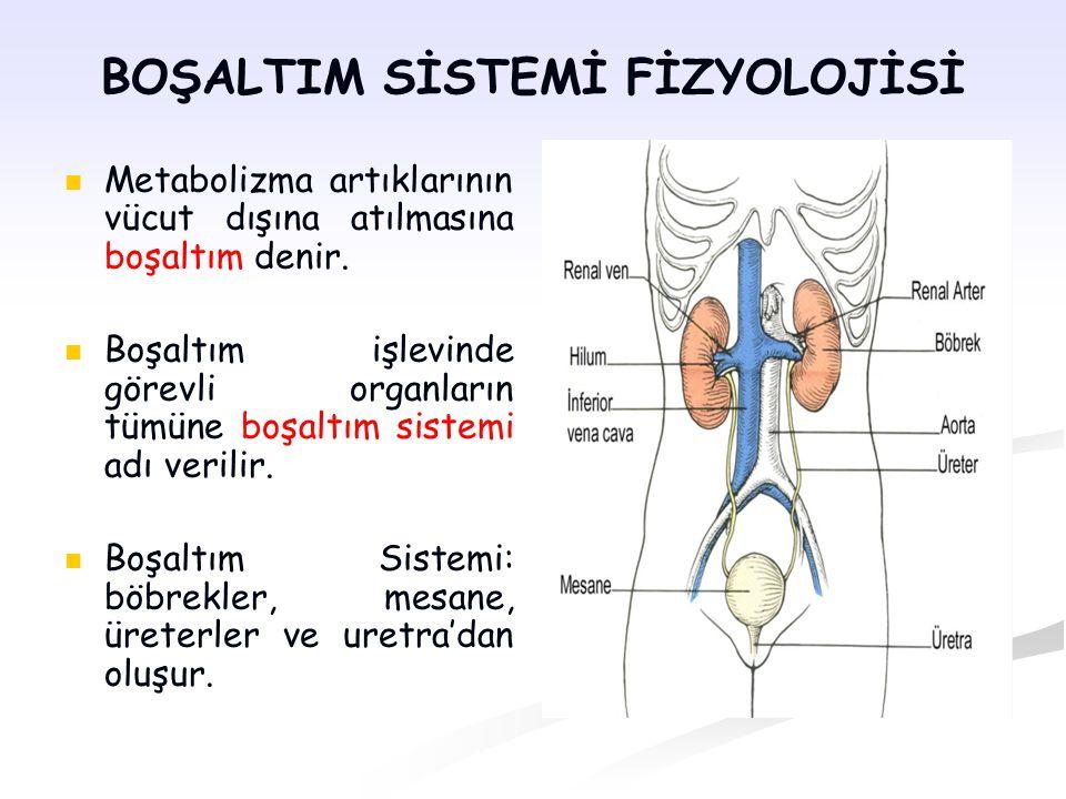 Boşaltım Sisteminin Görevleri: Vücut sıvılarının hacim ve içeriğinin düzenlenmesi Kan basıncının düzenlenmesi K, Na, Ca gibi iyonların plazma konsantrasyonunun düzenlenmesi (elektrolit dengesi) Kan pH'sının düzenlenmesi Hücrelerde metabolizma sonucu oluşan ve kana verilen artık ürünlerden kanın arındırılması