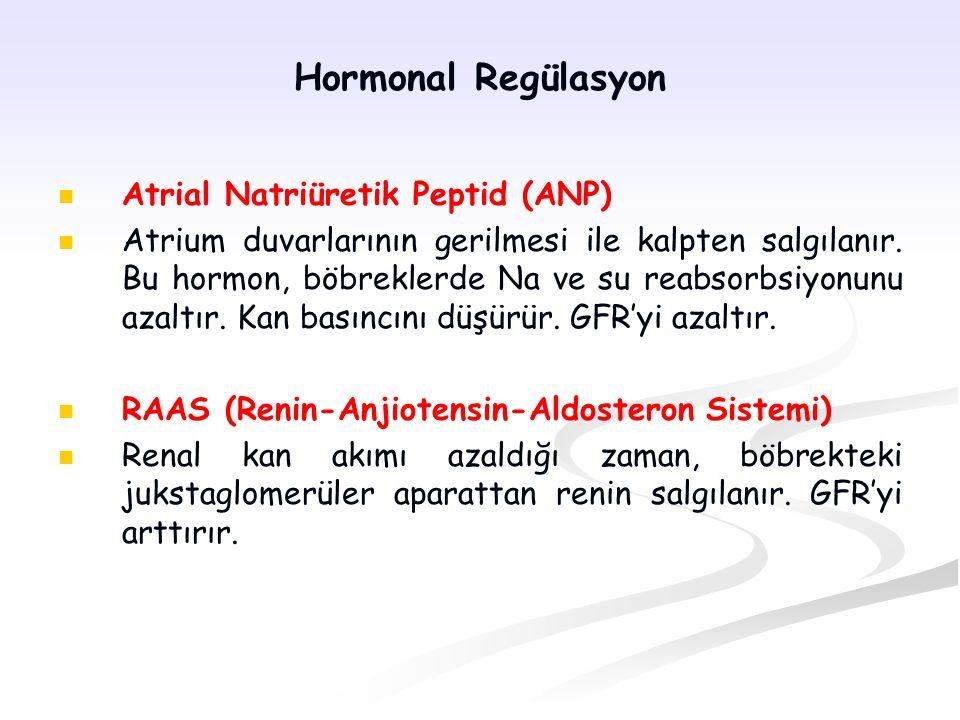 Hormonal Regülasyon Atrial Natriüretik Peptid (ANP) Atrium duvarlarının gerilmesi ile kalpten salgılanır. Bu hormon, böbreklerde Na ve su reabsorbsiyo