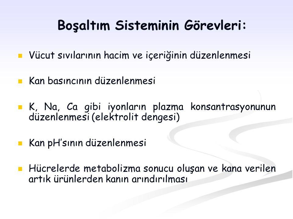 Glomerüler Kanın Hidrostatik Basıncı: Glomerüler kapillerlerdeki basınçtır.