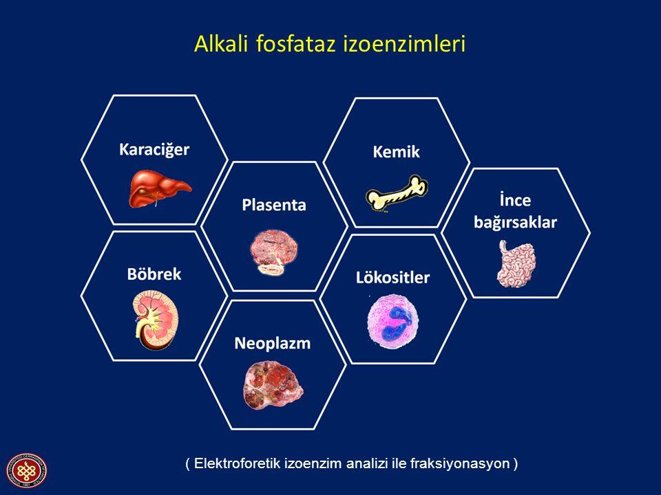 Alkali fosfataz izoenzimleri ( Elektroforetik izoenzim analizi ile fraksiyonasyon )