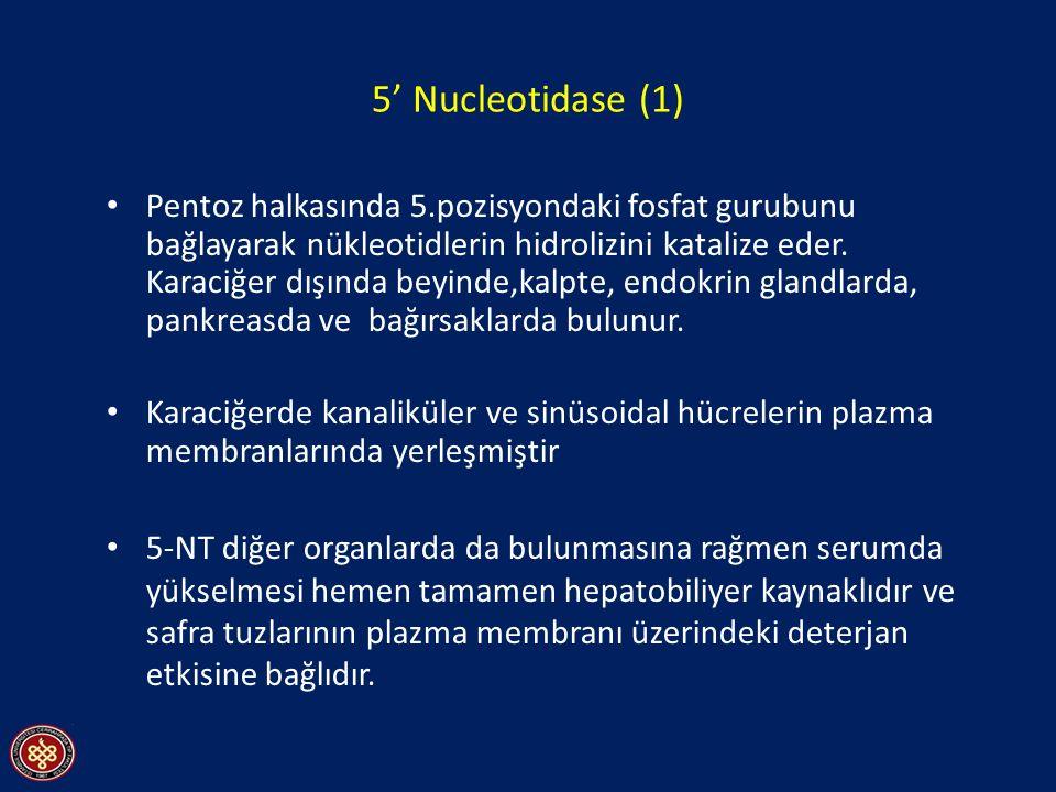 5' Nucleotidase (1) Pentoz halkasında 5.pozisyondaki fosfat gurubunu bağlayarak nükleotidlerin hidrolizini katalize eder. Karaciğer dışında beyinde,ka