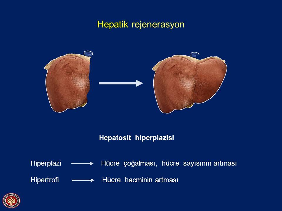 Hepatik rejenerasyon Hepatosit hiperplazisi Hiperplazi Hücre çoğalması, hücre sayısının artması Hipertrofi Hücre hacminin artması