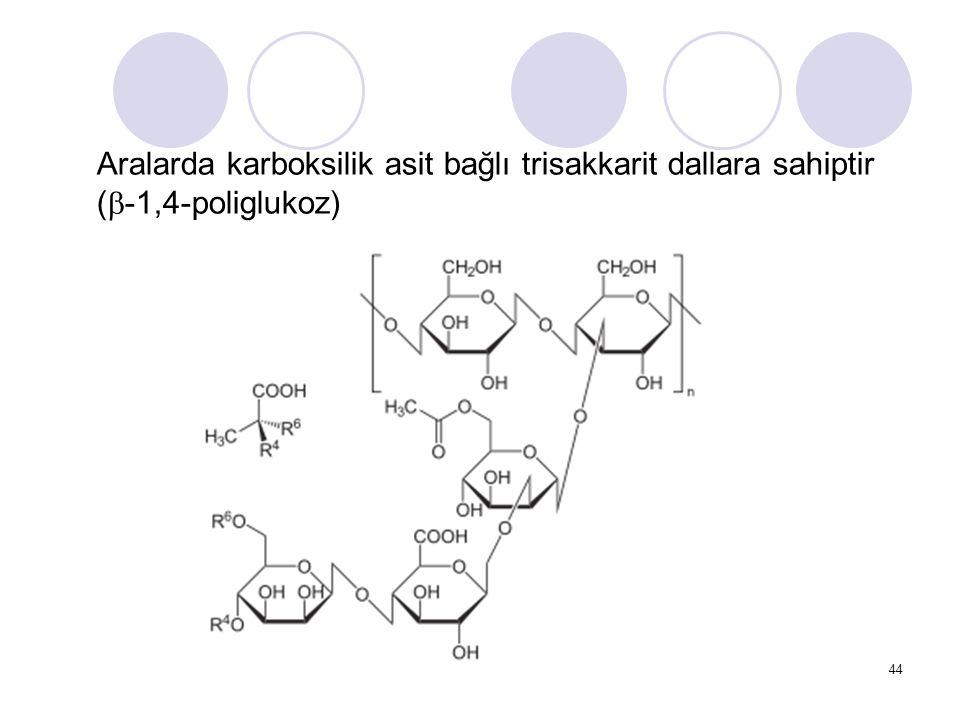 Aralarda karboksilik asit bağlı trisakkarit dallara sahiptir (  -1,4-poliglukoz) 44