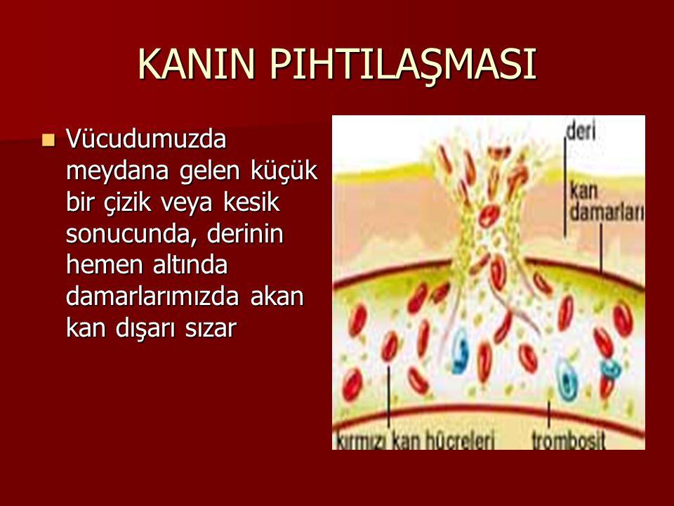 KANIN PIHTILAŞMASI Vücudumuzda meydana gelen küçük bir çizik veya kesik sonucunda, derinin hemen altında damarlarımızda akan kan dışarı sızar Vücudumu