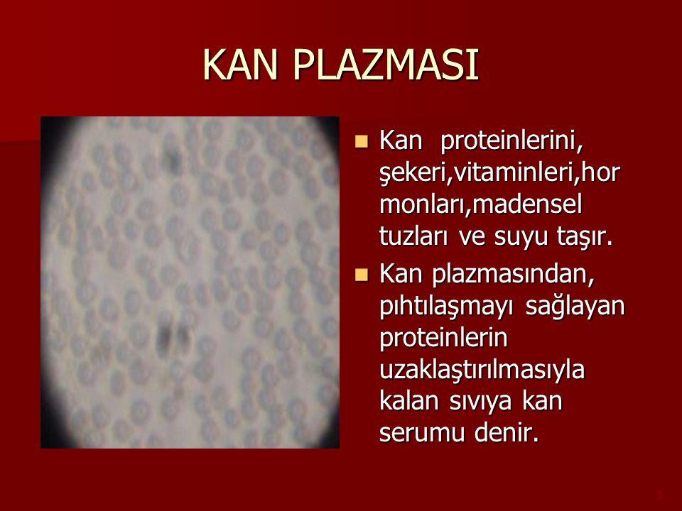 KAN PLAZMASI Kan proteinlerini, şekeri,vitaminleri,hor monları,madensel tuzları ve suyu taşır. Kan proteinlerini, şekeri,vitaminleri,hor monları,maden