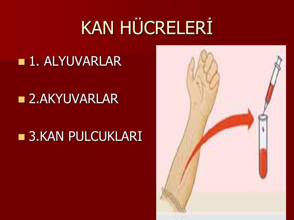 KAN HÜCRELERİ 1.ALYUVARLAR 1.
