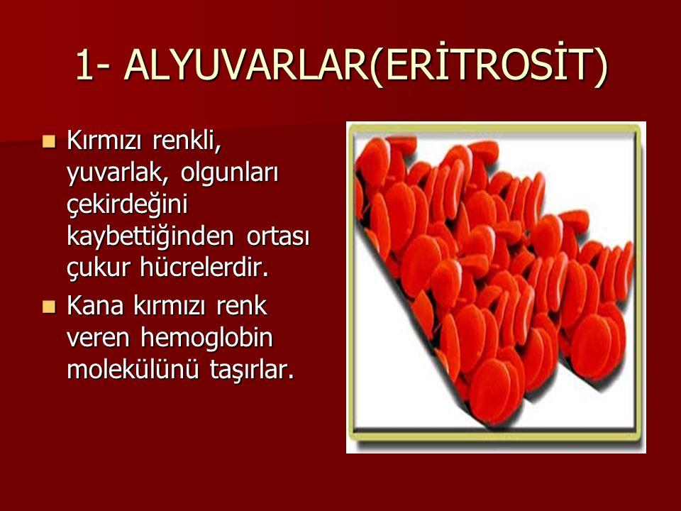 1- ALYUVARLAR(ERİTROSİT) Kırmızı renkli, yuvarlak, olgunları çekirdeğini kaybettiğinden ortası çukur hücrelerdir.