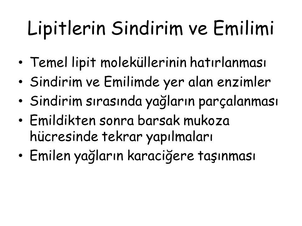 Lipitlerin Sindirim ve Emilimi Temel lipit moleküllerinin hatırlanması Sindirim ve Emilimde yer alan enzimler Sindirim sırasında yağların parçalanması Emildikten sonra barsak mukoza hücresinde tekrar yapılmaları Emilen yağların karaciğere taşınması