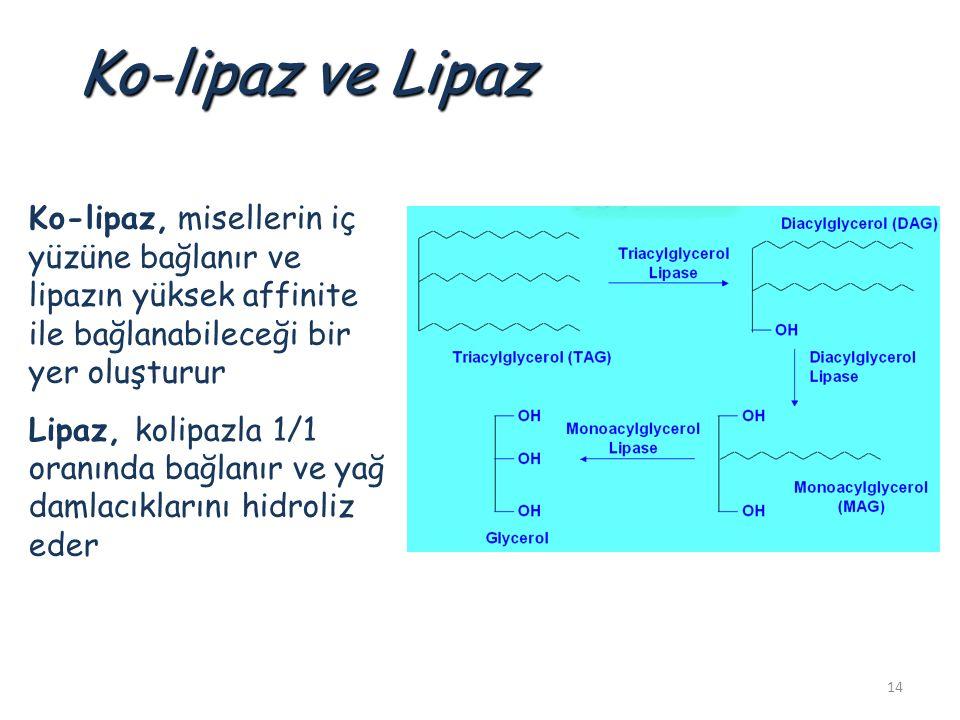 14 Ko-lipaz ve Lipaz Ko-lipaz, misellerin iç yüzüne bağlanır ve lipazın yüksek affinite ile bağlanabileceği bir yer oluşturur Lipaz, kolipazla 1/1 oranında bağlanır ve yağ damlacıklarını hidroliz eder