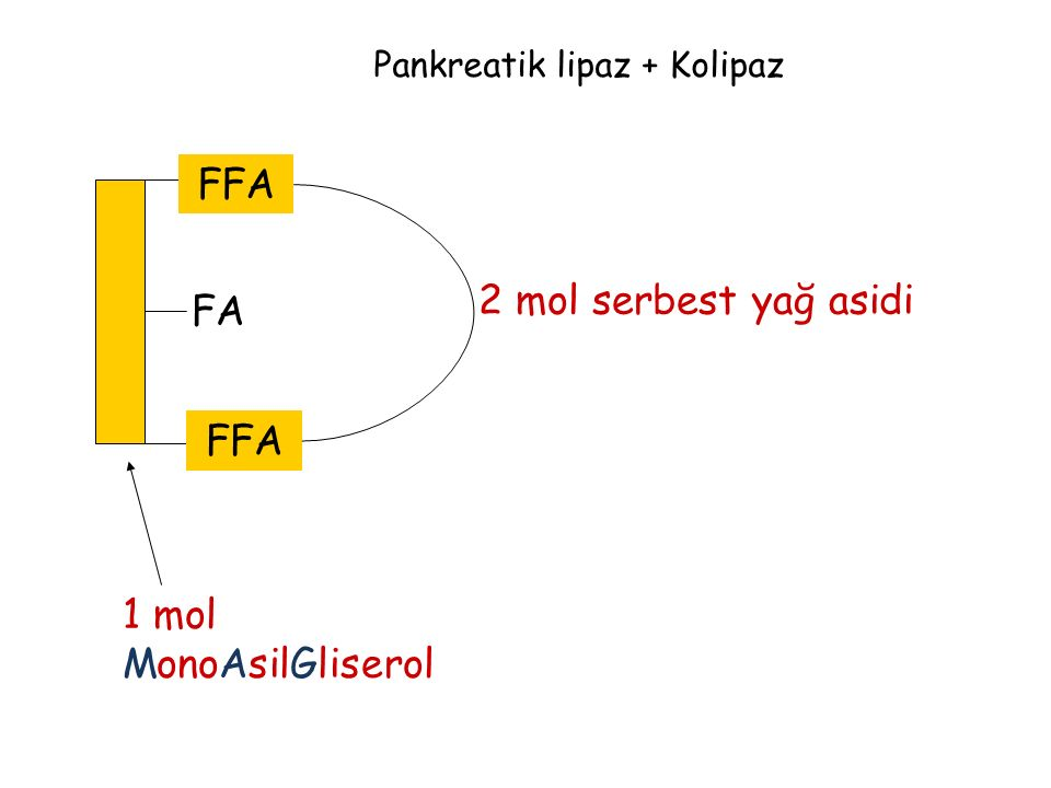 FA Pankreatik lipaz + Kolipaz FFA 2 mol serbest yağ asidi 1 mol MonoAsilGliserol