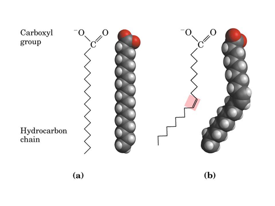 FFA Safra asitleri; yağ globülündeki mono-, di-, ve tri- gliseritleri sarmalar ve büyük yağ globüllerini küçük trigliserit emülsiyon damlacıklarına parçalar.