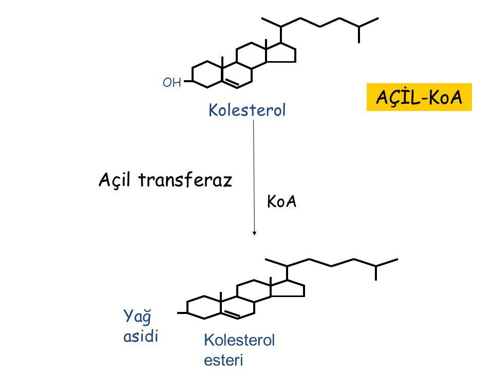 OH Kolesterol Açil transferaz KoA AÇİL-KoA Yağ asidi Kolesterol esteri