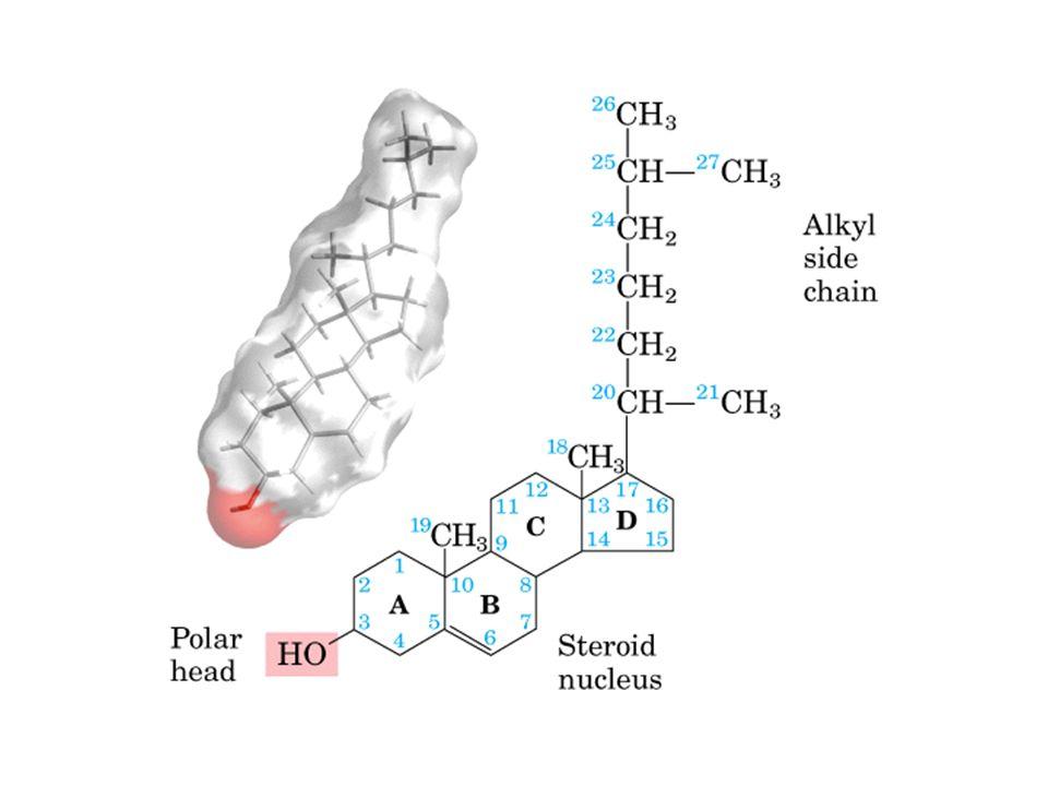İnce bağırsaktaki miçellerde az miktarda trigliserid, bol miktarda 2-monogliserid, yağ asidi, gliserol, fosfolipid, serbest kolesterol ve safra tuzları bulunur.