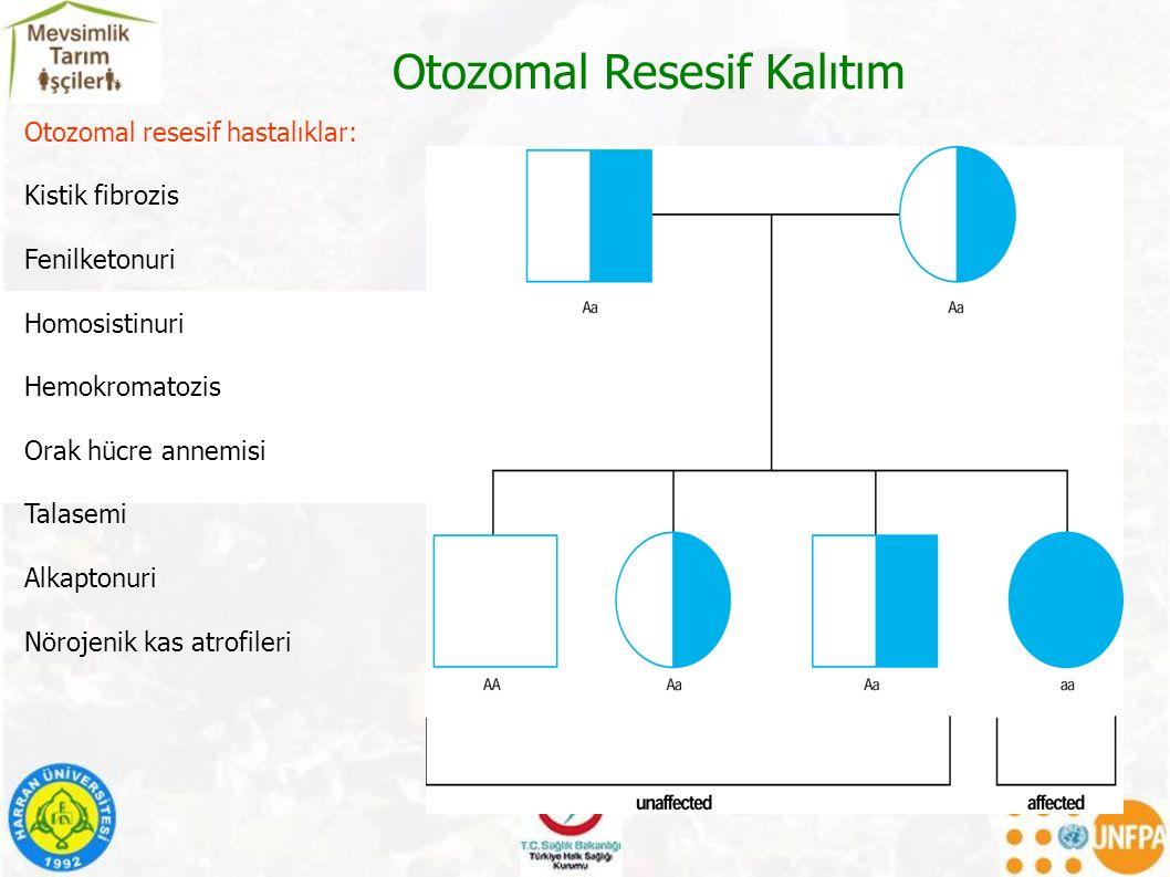 Otozomal Resesif Kalıtım Otozomal resesif hastalıklar: Kistik fibrozis Fenilketonuri Homosistinuri Hemokromatozis Orak hücre annemisi Talasemi Alkaptonuri Nörojenik kas atrofileri