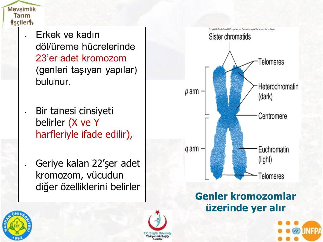 Erkek ve kadın döl/üreme hücrelerinde 23'er adet kromozom (genleri taşıyan yapılar) bulunur.